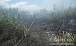 Đám cỏ sậy phát cháy khiến người dân hoảng hốt