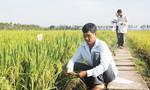 Gạo Việt Nam 'gắn mác' Thái Lan, Campuchia để xuất khẩu