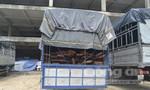 Phát hiện vụ vận chuyển gỗ số lượng lớn nhiều nghi vấn tại Đà Nẵng