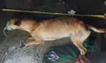 Kỳ cuối: Hung thủ thừa nhận giết người từ vết bằm trên chân… con chó