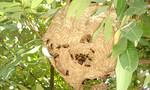 Sợ ong vò vẽ đốt bỏ chạy, một người đàn ông tử vong