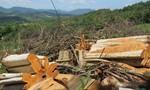 Phó chủ tịch tỉnh Phú Yên chỉ đạo điều tra vụ phá rừng