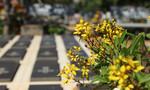 Đôi vợ chồng già nhặt hơn 3.000 xác thai nhi và câu chuyện tình bên nấm mộ