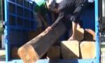 Bắt giữ một vụ vận chuyển hơn 5m3 gỗ lậu