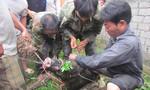 Một thợ săn bị lợn rừng cắn chết tại chỗ