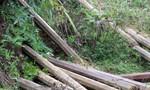 Phát hiện 8 khối gỗ vô chủ ở bìa rừng