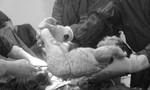 Kịp thời cứu sống thai phụ bị vỡ ống dẫn trứng