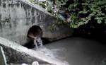 Cô gái ngáo đá chui vào cống nước thải