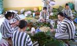 Chế độ dành cho phạm nhân trong trại giam như thế nào?