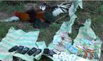 Bắt 8 con bạc hăng say đá gà ngoài đồng vắng