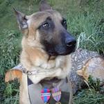 Nữ 'chiến binh' Diesel được truy tặng huân chương Dickin của nước Anh
