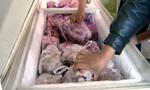 Bắt quả tang cơ sở kinh doanh 2.100 ký thịt thối