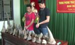 Khởi tố bắt tạm giam đối tượng vận chuyển sừng tê giác