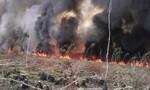 Cháy hơn 11ha rừng do đốt ong