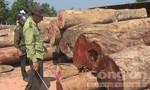 Điều tra vụ 'phá rừng có phép'