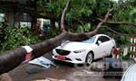 Hà Nội ngổn ngang sau dông lốc kèm mưa lớn