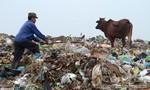 Hãi hùng chăn thả bò, dê ở bãi rác lớn nhất Bắc Ninh