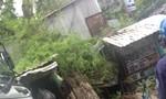 Mưa lớn, nhiều cây xanh bị quật ngã