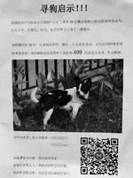 Rao thưởng nhà cho người tìm ra …chó yêu