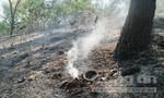Đốt tổ ong, rừng thông cháy dữ dội