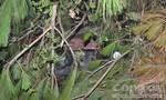 Xe công nông bị lật trong rừng keo, 5 người trọng thương
