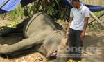 Vào tận vườn Quốc gia cưa trộm ngà voi 20 tuổi