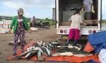 Cá chết hàng loạt, người dân bán đổ bán tháo
