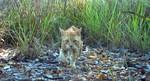 Úc sẽ loại trừ 2 triệu con mèo