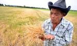 Thái Lan: Hạn hán đẩy nông dân vào nợ nần