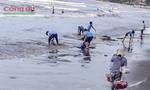 Rác và thủy triều đỏ tấn công bờ biển Mũi Né