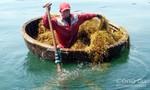 Ngư dân Quảng Nam đi hái lộc trời