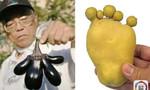 Khoai tây, cà tím hình thù kì dị