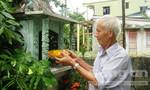 Thành Cổ: 'Thánh địa' của những người trồng hoa không bao giờ bán