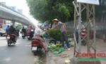 Chợ chồm hổm lấn chiếm vỉa hè đường Cộng Hòa