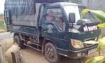 Bắt nhóm trộm bò bằng xe tải
