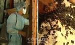 Clip: Phun hóa chất diệt ổ bọ đậu đen 'khủng'
