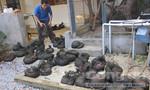 Thanh Hóa: Bắt xe ô tô chở 56 con tê tê Java