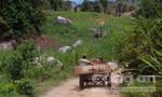 Chính quyền để lâm tặc phá rừng theo kiểu tận diệt?