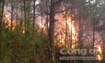 Nghệ An: 7 hecta rừng thông hơn 20 năm tuổi bị cháy rụi