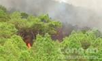 Rừng thông sát biển bốc cháy dữ dội sau cơn mưa
