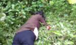 Đau lòng nghịch tử dùng gậy tre đánh chết mẹ trong ngày lễ Vu Lan
