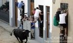 12 người thiệt mạng trong lễ hội bò rượt ở Tây Ban Nha