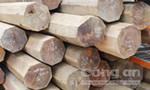 Điều tra hơn 5,5m3 gỗ quý hiếm cất sau nhà nguyên Phó Bí thư huyện ủy