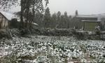 Thiệt hại nặng do mưa tuyết diện rộng tại các tỉnh miền Bắc