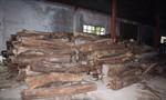 Phát hiện hàng trăm m3 gỗ quý không rõ nguồn gốc giấu trong kho