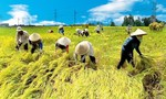 Nông nghiệp Việt đang 'lâm nguy'?