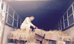 Cảnh sát giao thông bắt giữ xe tải vận chuyển gỗ lậu