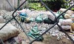 TP.HCM: 'Nuôi' lăng quăng và muỗi gây sốt xuất huyết, 38 cơ sở bị xử phạt