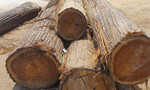 Bắt xe gỗ của Trưởng ban Quản lý rừng