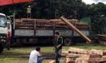 Nhóm lâm tặc manh động cướp xe chở gỗ trong tay lực lượng chức năng